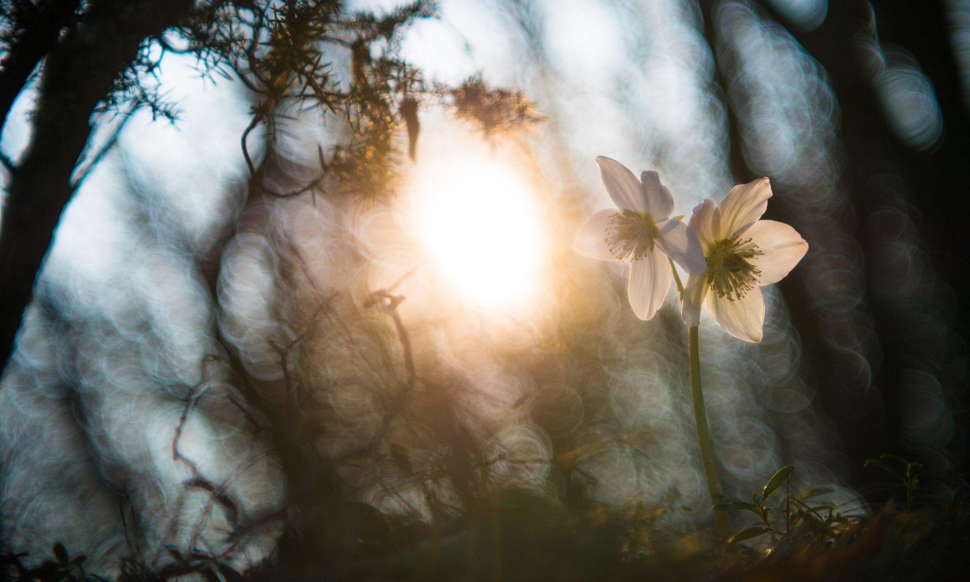 一輪の花の画像